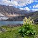 Wild Rhubarb on Shore of Mountain Lake - PhotoDune Item for Sale