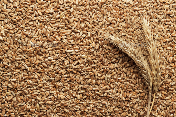 Wheat On The Table  - Stock Photo - Images