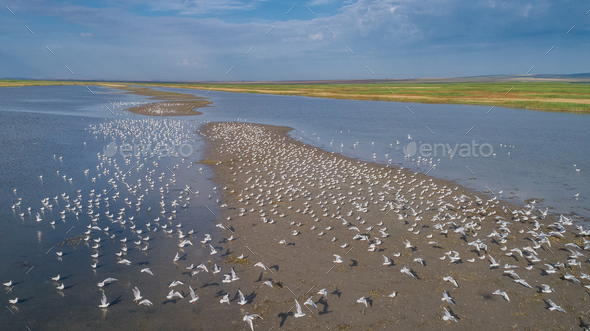 colony of seagulls - Stock Photo - Images