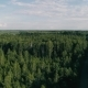Fly Over Forest - VideoHive Item for Sale