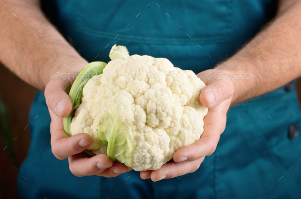 Farmer hold fresh organic cauliflower in his hands. Vegetable ha - Stock Photo - Images
