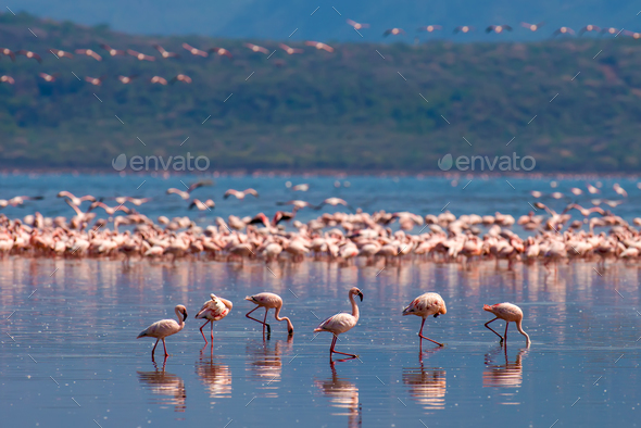 Flamingos - Stock Photo - Images