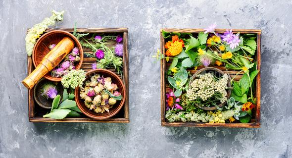 herbal medicine - Stock Photo - Images