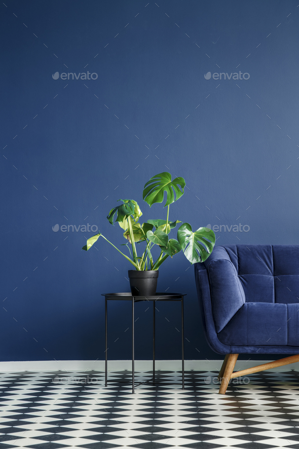 Part of a dark sofa next to a monstera deliciosa plant standing - Stock Photo - Images