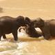 Elephants - PhotoDune Item for Sale