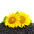 Two sunflower and sunflower seeds on a white background with emp - PhotoDune Item for Sale