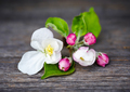 Apple flowers on old wooden background - PhotoDune Item for Sale