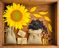 Beautiful composition with sunflower, oil and seeds in bags on w - PhotoDune Item for Sale