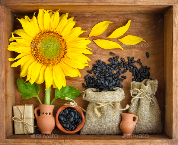 Beautiful composition with sunflower and seeds in bags on wooden - Stock Photo - Images