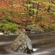 Rock in the Ninglinspo river - PhotoDune Item for Sale