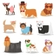 Dog Vector Puppy Pet Animal Doggie Character