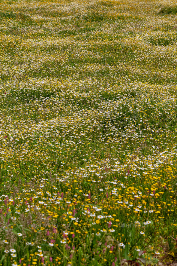 Spring flower meadow - Stock Photo - Images