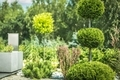 Topiary Art of Clipping Shrubs - PhotoDune Item for Sale