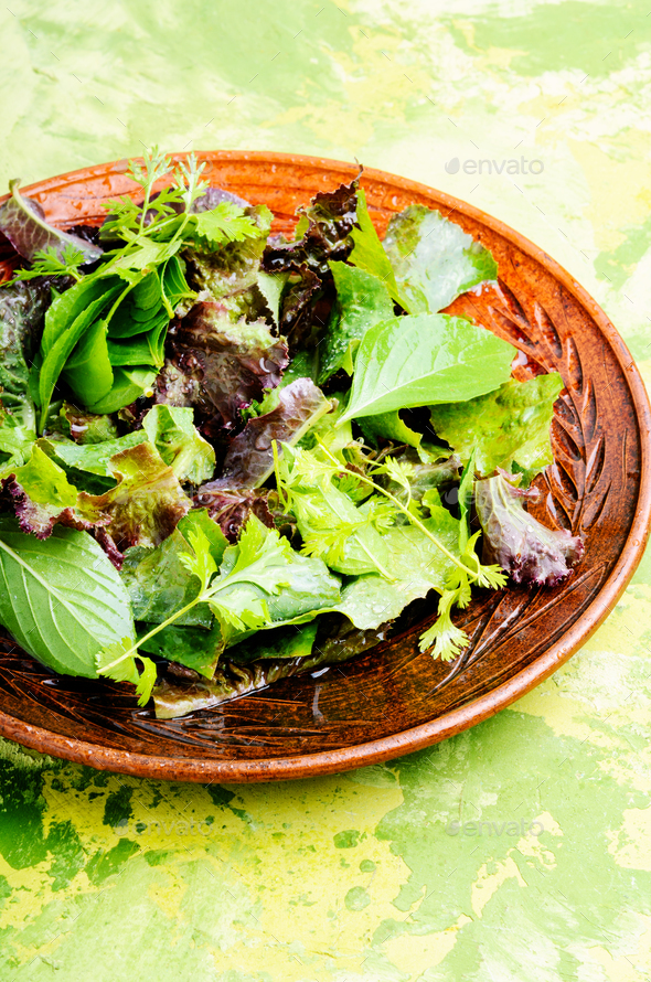 Healthy green salad - Stock Photo - Images