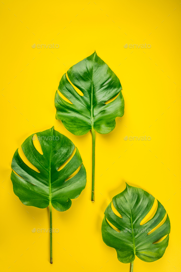 Tropical Leaves On Yellow Background Stock Photo By Klenova Photodune Here you can explore hq tropical leaves transparent illustrations, icons and clipart with filter polish your personal project or design with these tropical leaves transparent png images, make it even. https photodune net item tropical leaves on yellow background 22360027