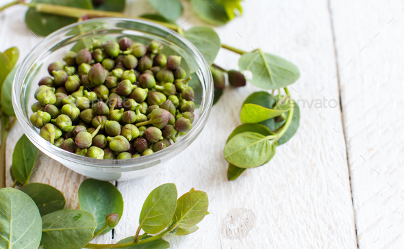Fresh capers and capers branches - Stock Photo - Images