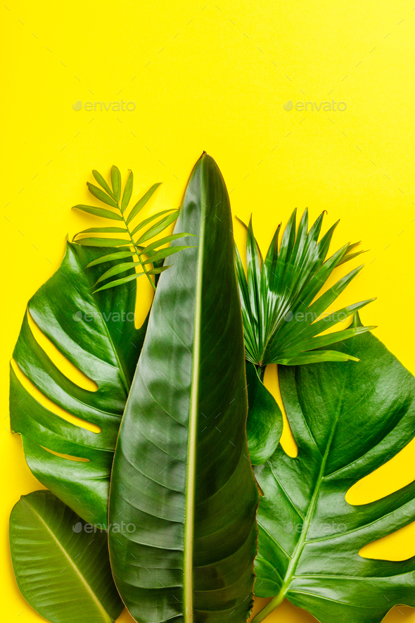 Tropical leaves on yellow background - Stock Photo - Images