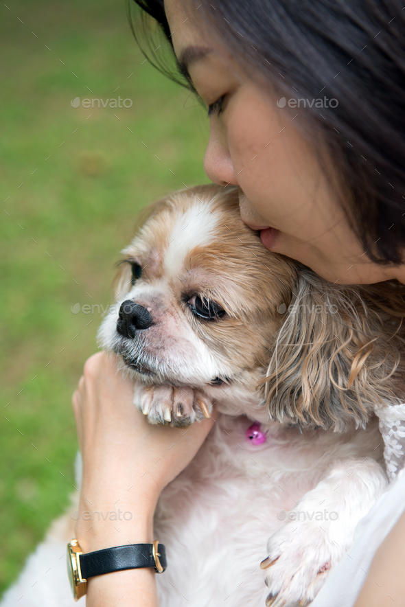 Asian young lady with her Shih Tze dog - Stock Photo - Images