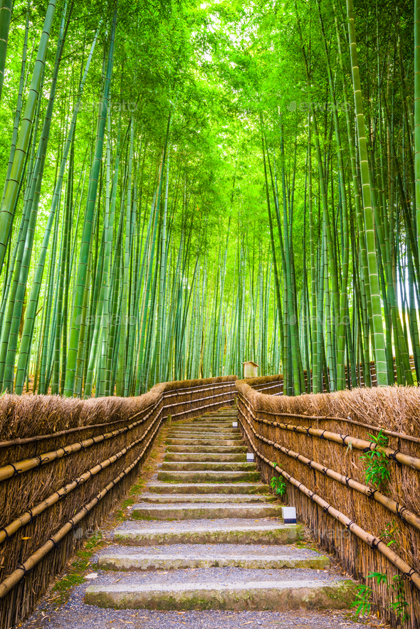Kyoto, Japan Bamboo Forest - Stock Photo - Images
