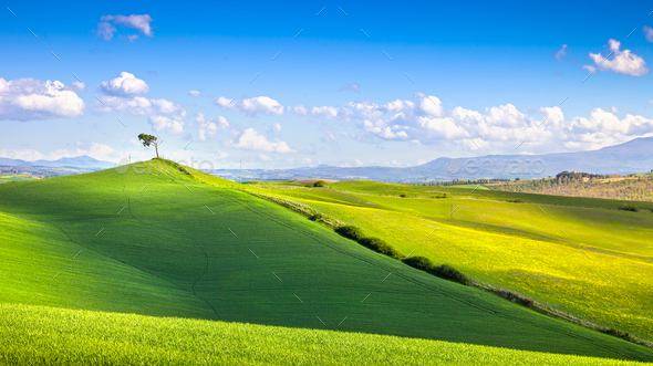 Tuscany panorama, rolling hills, fields, meadow and lonely tree. - Stock Photo - Images