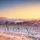 Vineyards rows covered by snow in winter at sunset. Chianti, Sie - PhotoDune Item for Sale