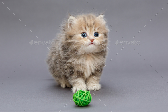 Small shaggy kitten - Stock Photo - Images