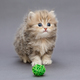 Small shaggy kitten - PhotoDune Item for Sale