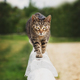 Kitty walking on the wooden fence - PhotoDune Item for Sale