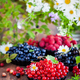Fresh ripe summer berries - red currant in the foreground and bl - PhotoDune Item for Sale