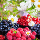 Fresh ripe summer berries - raspberry in the foreground, black a - PhotoDune Item for Sale
