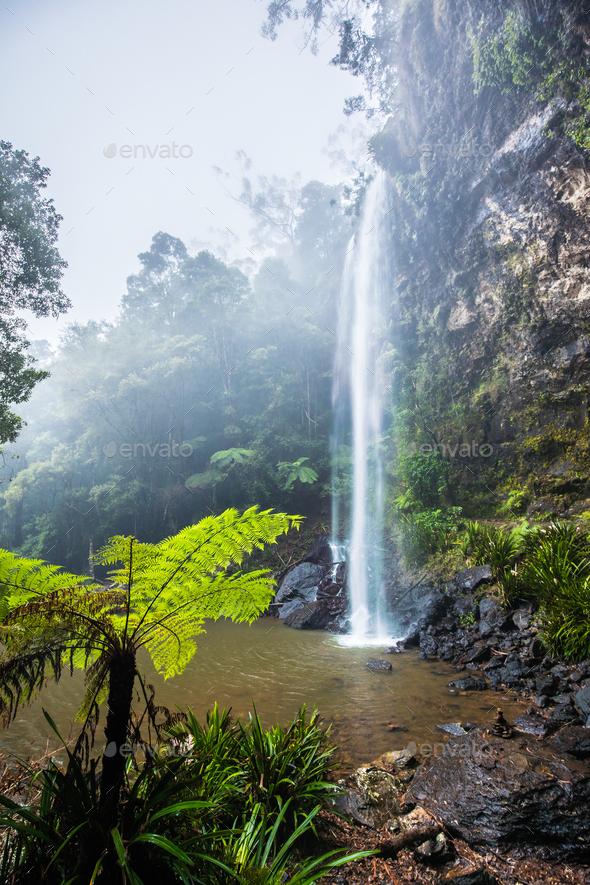 Twin Falls fern in the Springbrook National Park, Australia