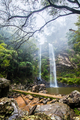Twin Falls hike in the Springbrook National Park, Queensland - PhotoDune Item for Sale