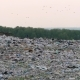 Aerial View of Huge City Garbage Dump at Sunset. Dog Runs Around Piles of Trash - VideoHive Item for Sale
