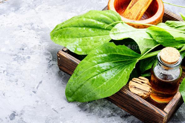 Green plantain plantago - Stock Photo - Images