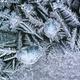 Frozen ice flower winter background - PhotoDune Item for Sale