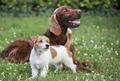 Dog friendship - happy pet friends - PhotoDune Item for Sale