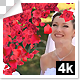 Rose and Petals Transition with Luma Matte – 7 Variations - 4k - VideoHive Item for Sale