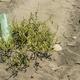 Plastic material on sand beach - PhotoDune Item for Sale