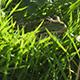 Amphibians - VideoHive Item for Sale