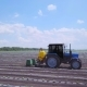 A Blue Tractor Brings Fertilizers To Cucumber Beds of Open Ground - VideoHive Item for Sale