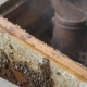 Working Bees Work Honeycomb with Honey. Beekeeper Pulls Out the Frame with Honey. Beekeeper Gets a - VideoHive Item for Sale