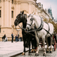 Prague, Czech Republic. Two Horses In Old-fashioned Coach At Old - PhotoDune Item for Sale