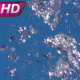 Flying A Jet Of Water - VideoHive Item for Sale
