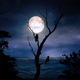Moonlight With Silhouette Of Owl - VideoHive Item for Sale