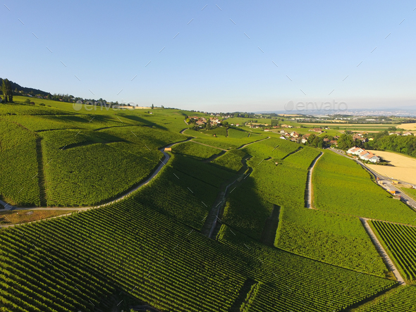 Aerial of Vineyard fields between Lausanne and Geneva in Switzer - Stock Photo - Images