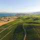 Aerial of Vineyard fields between Lausanne and Geneva in Switzer - PhotoDune Item for Sale