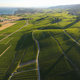 Aerial of Vineyard fields between Lausanne and Geneva in Switzer - PhotoDune Item for Sale