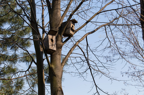 Nesting boxes on a tree. - Stock Photo - Images