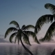 Serene Sea and Palms - VideoHive Item for Sale
