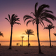 Silhouettes of palm trees against colorful sky at sunset - PhotoDune Item for Sale